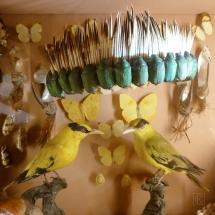 cabinet curiosités musée histoire naturelle venise