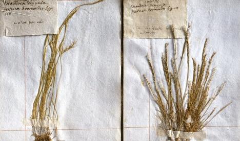 herbier-mnhn-04_06_botanique_herbiers-historiques_1440x850_0herbier-mnhn-