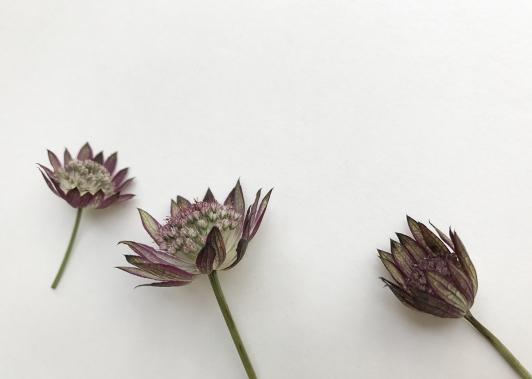 herbier-tendance-diy-vegetal-1