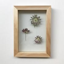 herbier-tendance-diy-vegetal-3