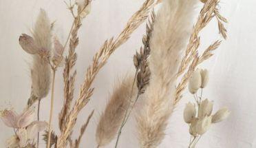 trouver-fleurs-séchées-jeanneparis-7
